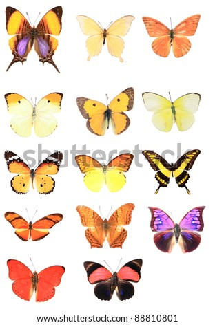 Many of the butterflies - stock photo