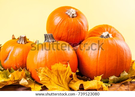 many orange pumpkins on a yellow background