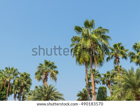 Many palm trees with blue sky in summer