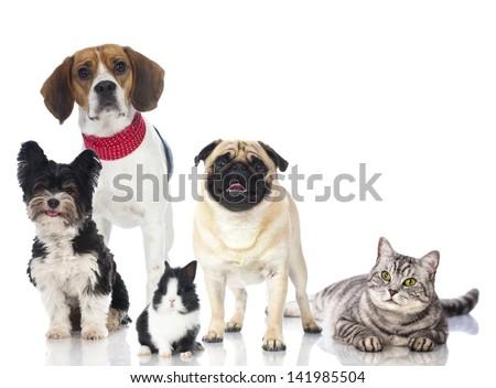 Many pets - stock photo