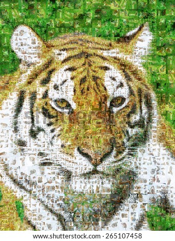 Many photographs of tiger, forms an image of the tiger - stock photo