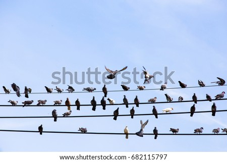 Many pigeons are resting on the cable.