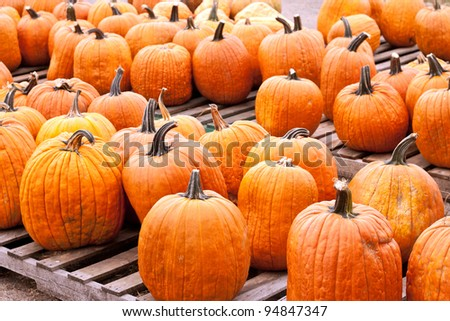 Many pumpkins sitting on crates in a market setting
