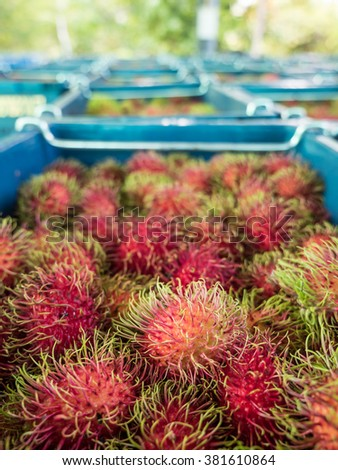 Many Rambutan in baskets at the wholesale market, Thailand.