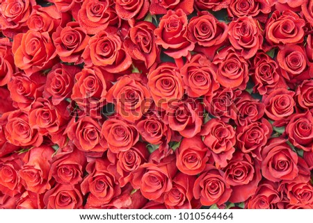 Many red roses with drops of water as beautiful floral background