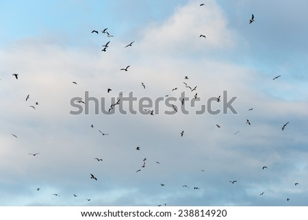 many seagulls on the beach flying. cloudy sky - stock photo