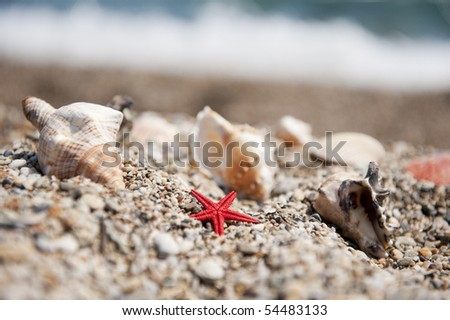 Many shells in front of the blue sea