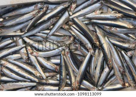stock-photo-many-small-sardines-on-stree