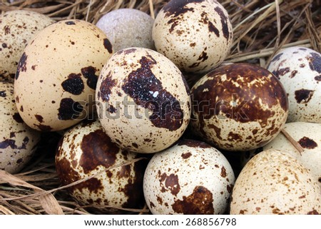 Many spotted quail eggs as a background