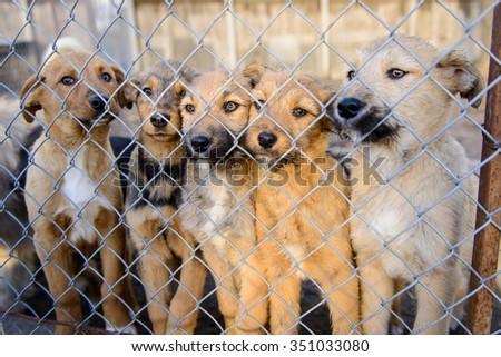 many stray dogs in shelter locked behind mesh - stock photo