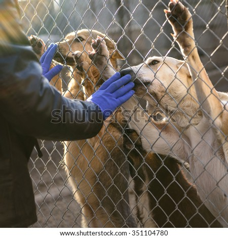 many stray dogs in shelter locked behind mesh - stock photo