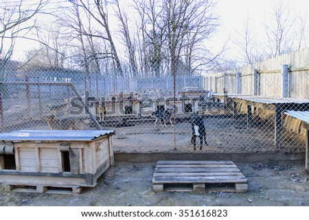 many stray dogs in shelter locked behind mesh