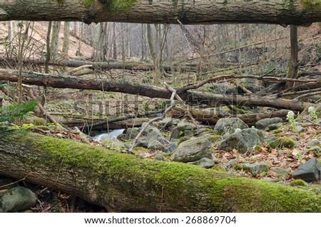 Many stumps - stock photo