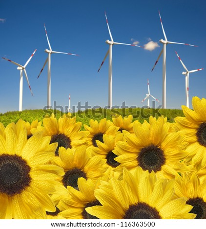 many sunflowers with drops ahead wind power plant - stock photo