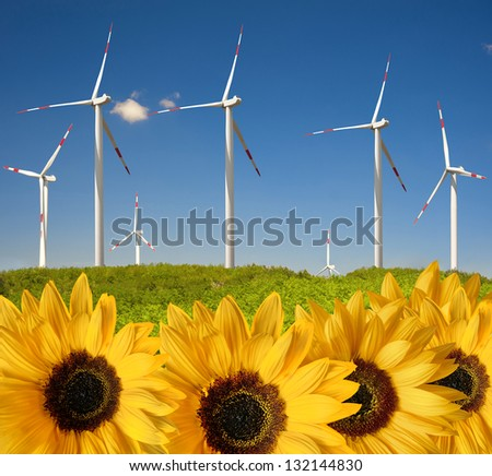 many sunflowers with drops ahead wind power plant
