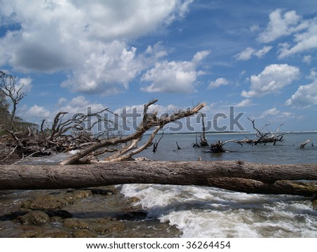 Many weathered fallen trees among the waves on an ocean beach. - stock photo