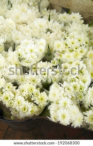many white flower in thai market - stock photo