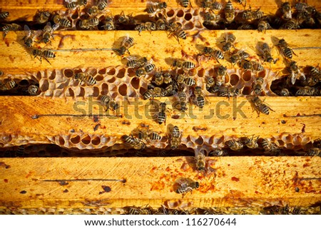 Many worker bees on honeycomb - stock photo