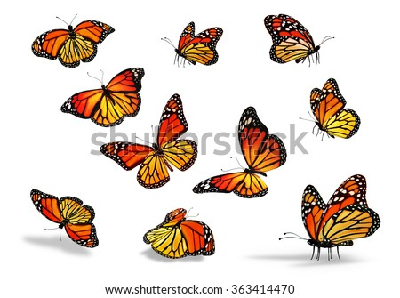 Many yellow-orange butterflies, isolated on white background