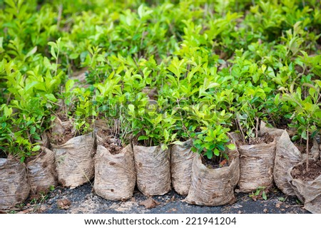 many young bush plants in packets with soil - stock photo