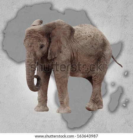 Map of africa and big elephant