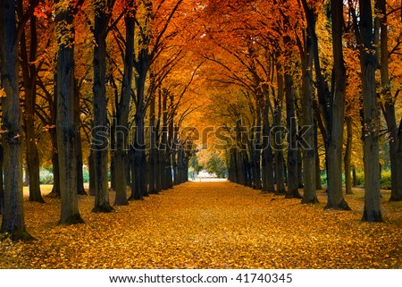 Maple alley - stock photo