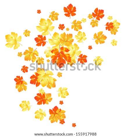 Maple autumn leaves background. - stock photo