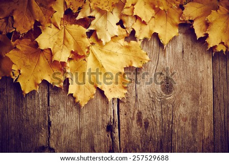 Maple autumn leaves on wooden background - stock photo