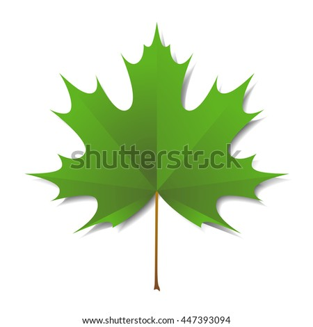 Maple green leaf  isolated on a white background