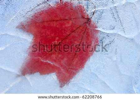 Maple leaf inside a textured cristal ice. - stock photo
