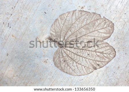 Maple leaf on cement texture background - stock photo