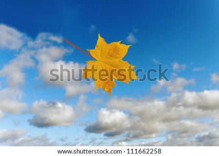 Maple leaf on the sky background. - stock photo