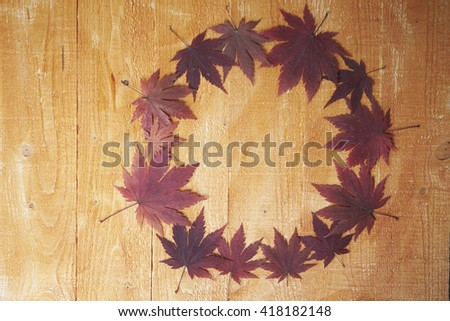 Maple leaves circle - stock photo
