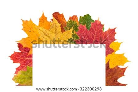maple leaves falling frame - stock photo