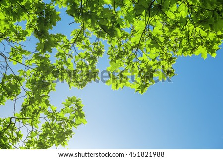maple leaves forest - stock photo
