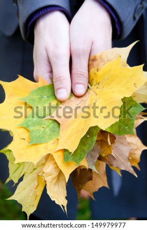 Maple leaves in the hands of young woman