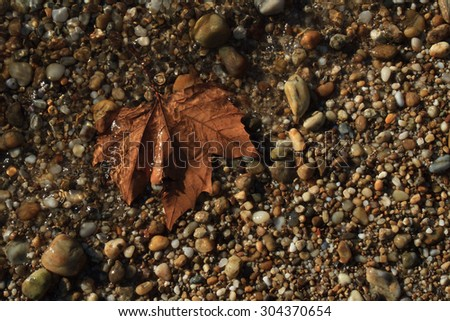 Maple Leaves in Water - stock photo