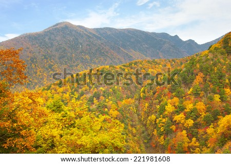 Maple leaves mountains