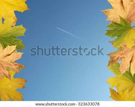 Maple leaves on a background of blue sky