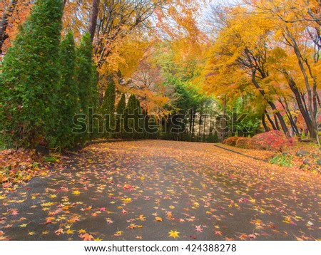 Maple leaves on the road and garden in Kyoto Japan