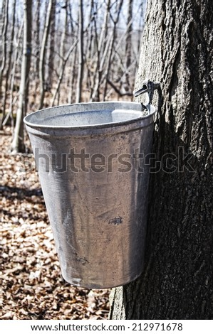 Maple sap tapping bucket