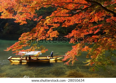 maple tree and river - stock photo