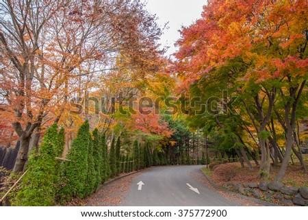 Maple tree in autumn at Japan