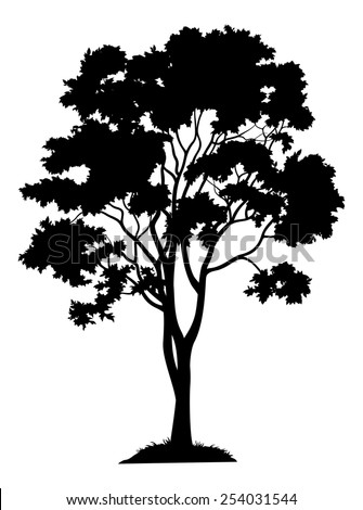 Maple tree with leaves and grass, black silhouette on white background.  - stock photo