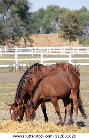 mare and foal eating hay - stock photo