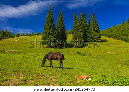 Mare and foal grazing in a sunny green meadow - stock photo