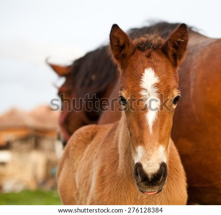 mare and her foal - stock photo