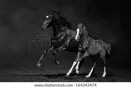 Mare and her foal, black-and-white photo - stock photo