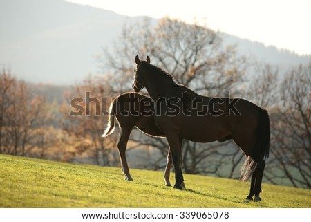 Mare and young horse on pasture. - stock photo