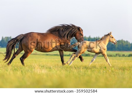 Mare with a foal running free in summer landscape. - stock photo